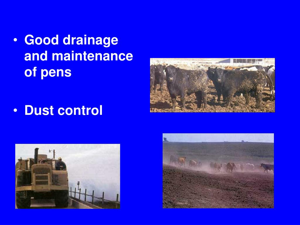 Good drainage and maintenance of pens
