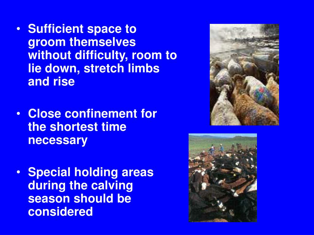 Sufficient space to groom themselves without difficulty, room to lie down, stretch limbs and rise