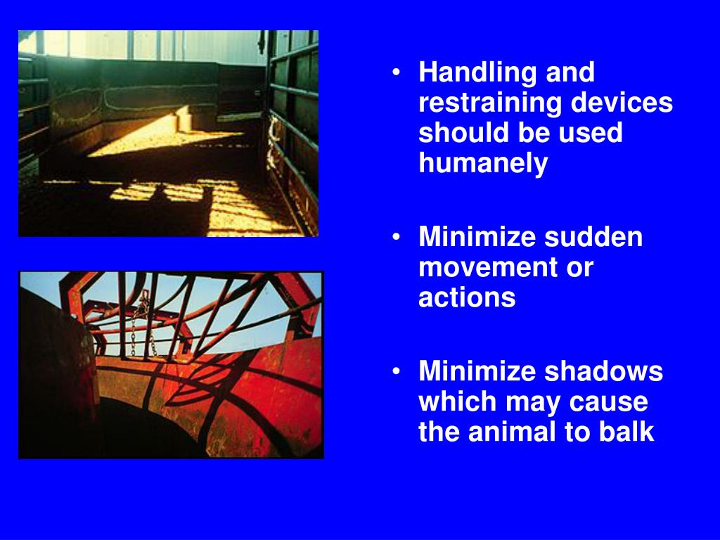 Handling and restraining devices should be used humanely