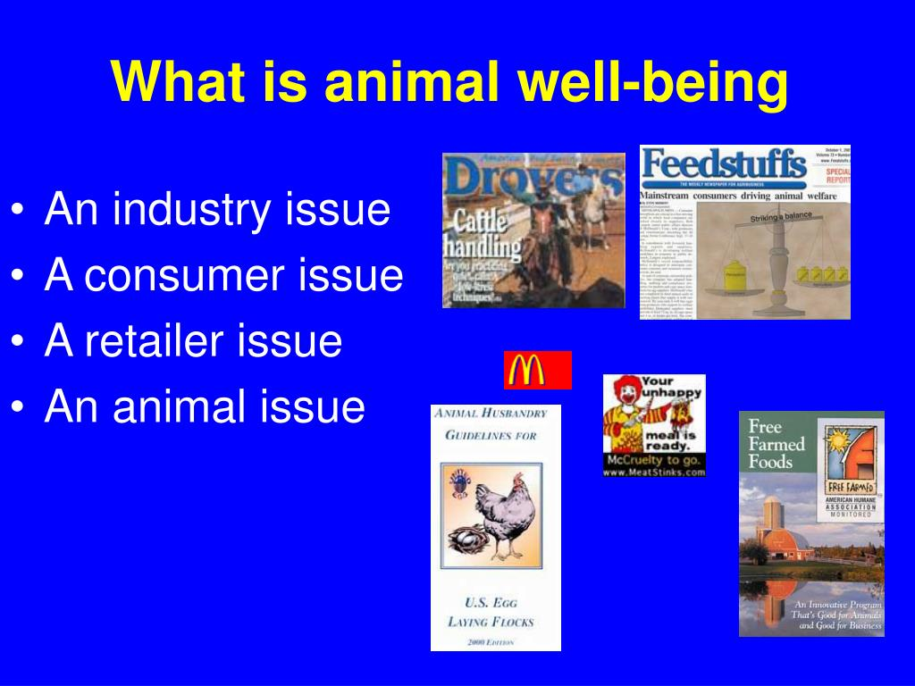 What is animal well-being