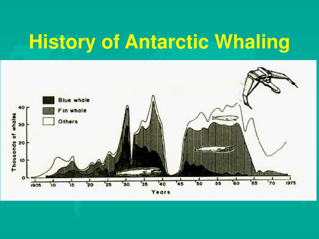 History of Antarctic Whaling