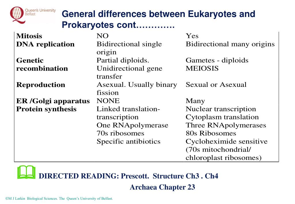prokaryotes and eukaryotes differences pdf