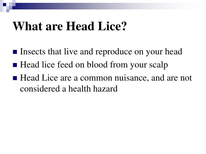 What are head lice