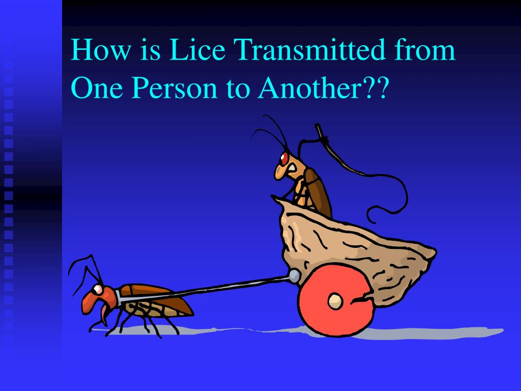 How is Lice Transmitted from One Person to Another??
