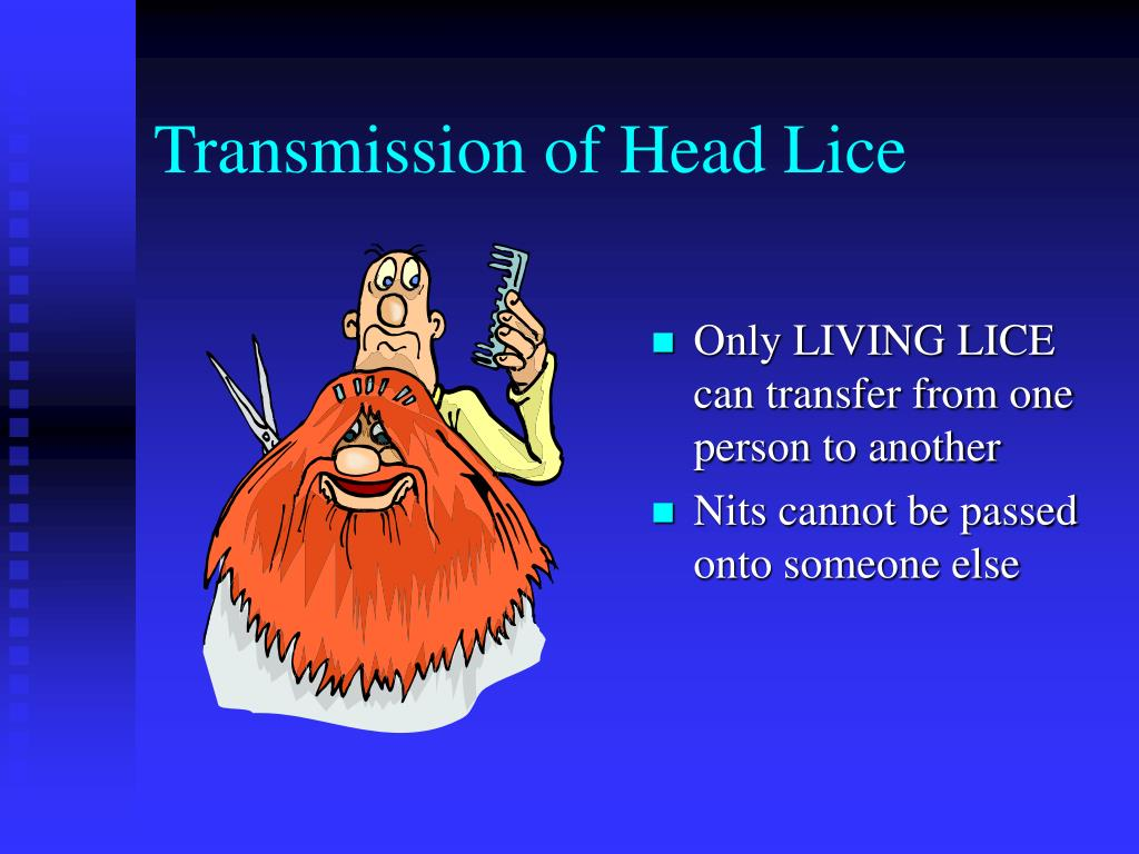 Transmission of Head Lice