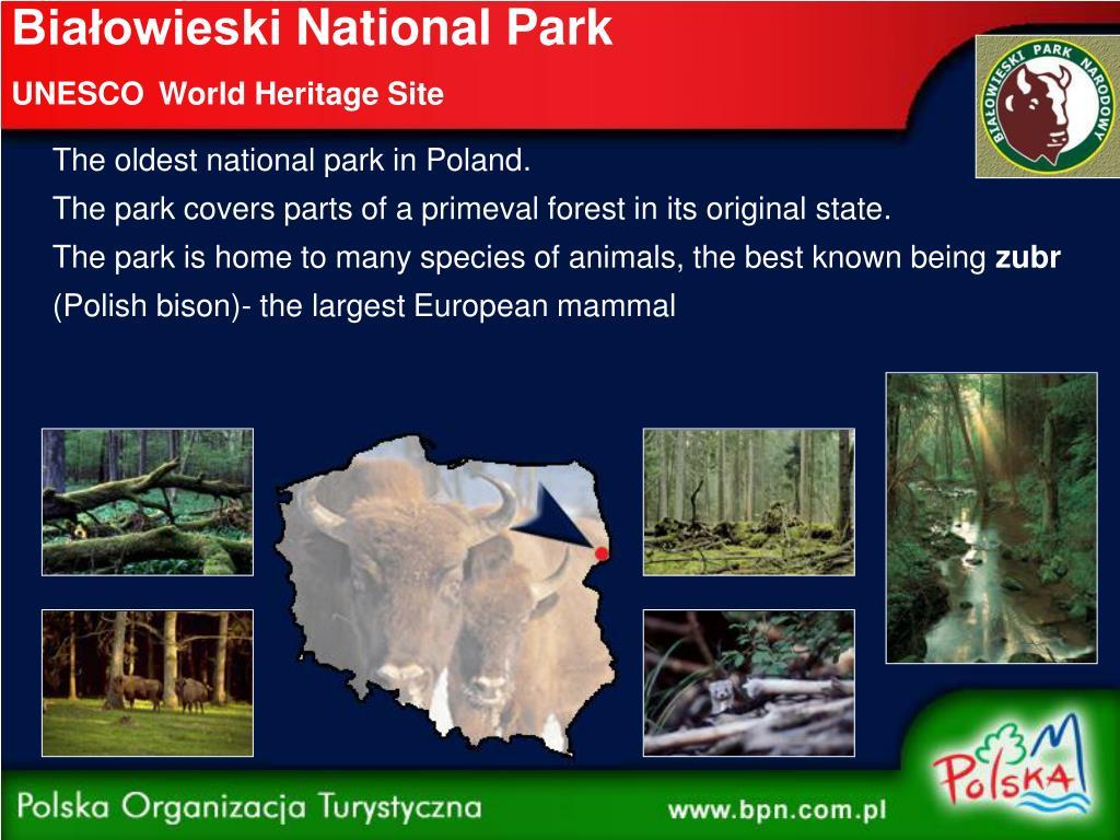 Białowieski