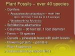 plant fossils over 40 species