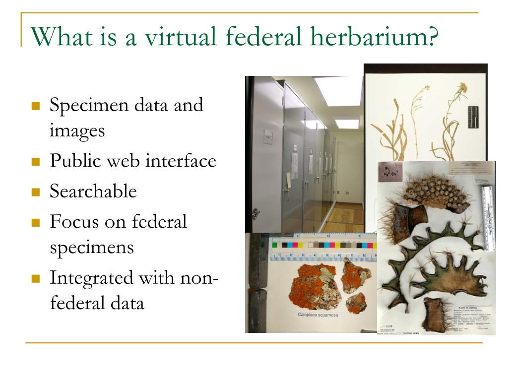 What is a virtual federal herbarium?