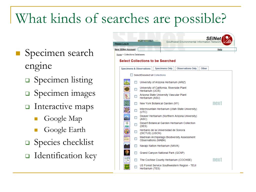 What kinds of searches are possible?