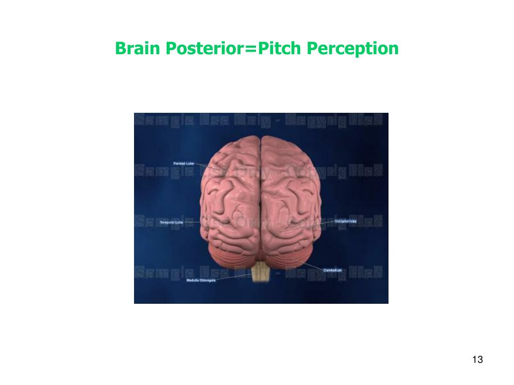 Brain Posterior=Pitch Perception