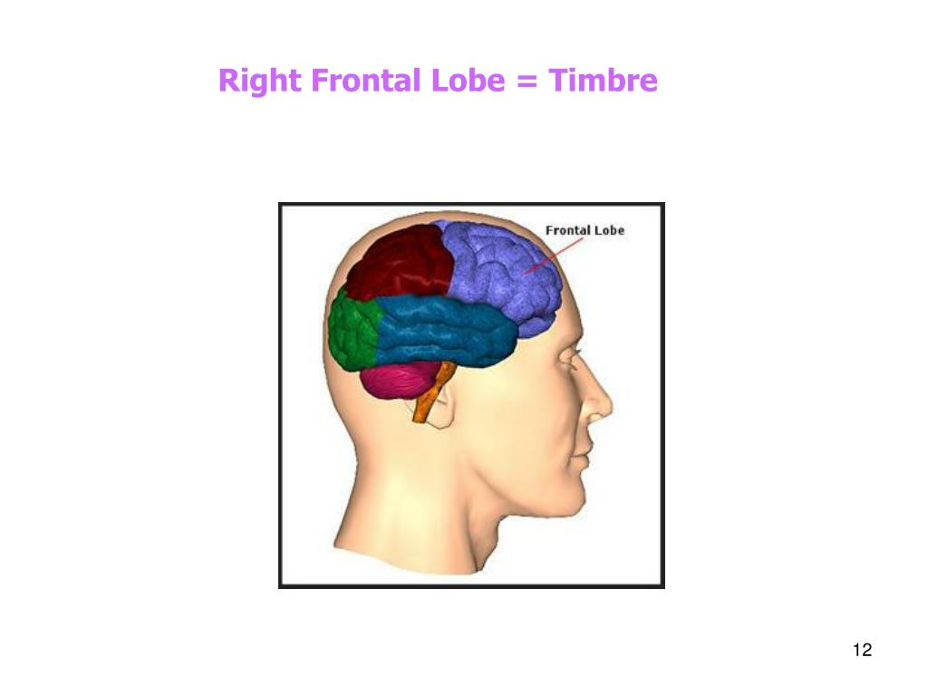 Right Frontal Lobe = Timbre