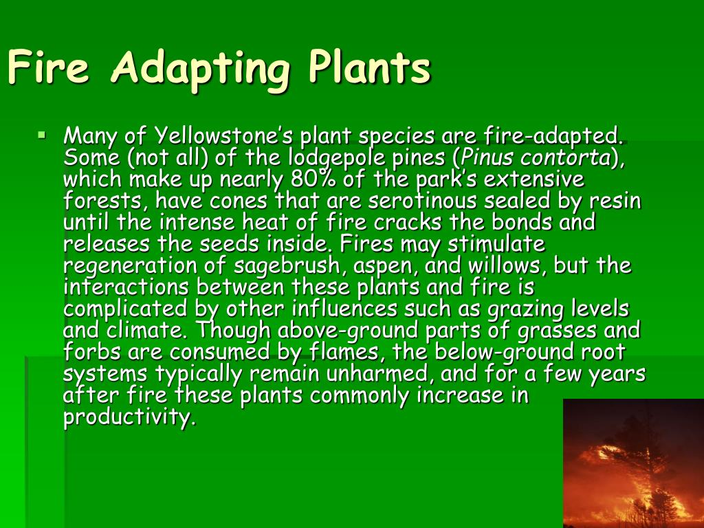 Fire Adapting Plants