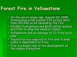 forest fire in yellowstone25