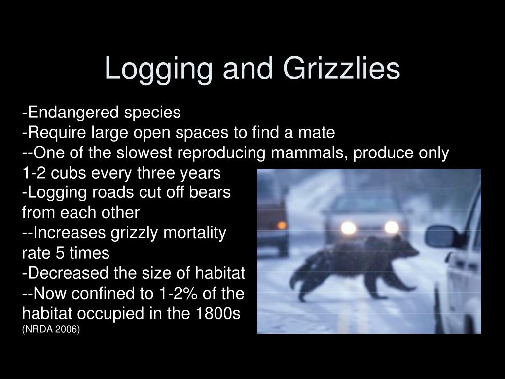 Logging and Grizzlies