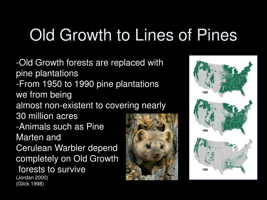 Old Growth to Lines of Pines