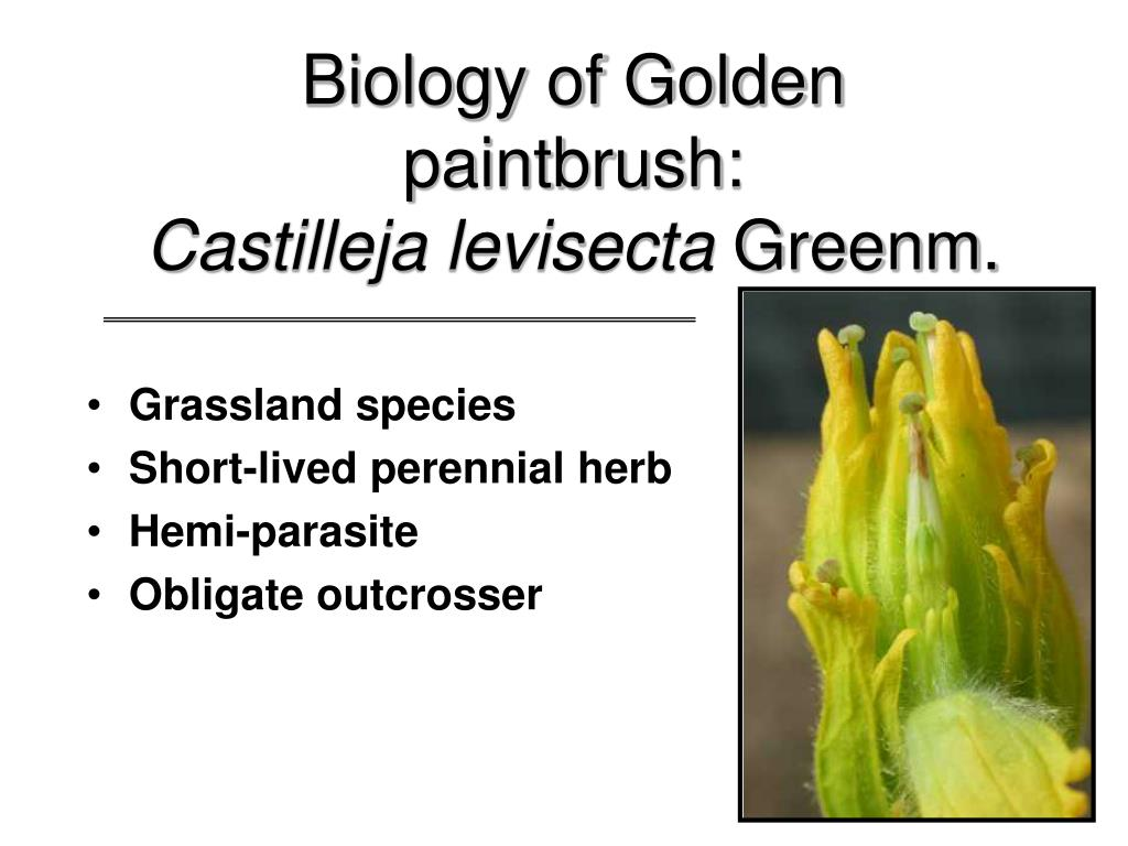 Biology of Golden