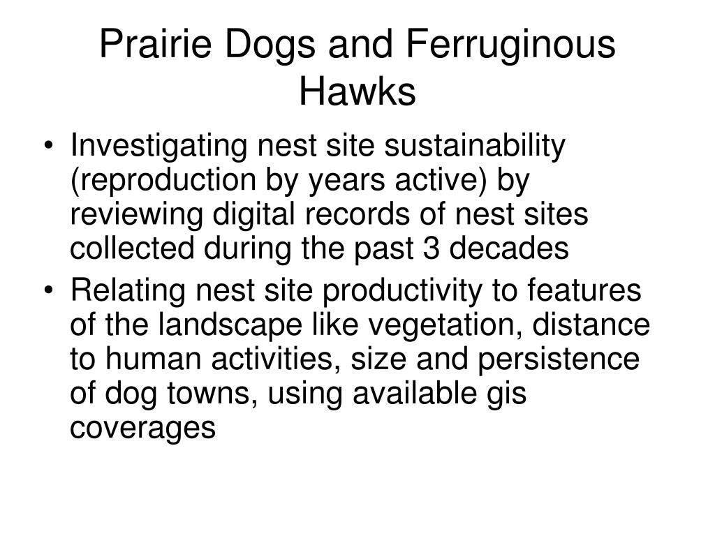 Prairie Dogs and Ferruginous Hawks