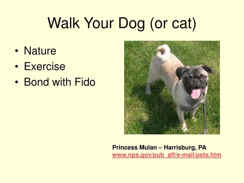 Walk Your Dog (or cat)
