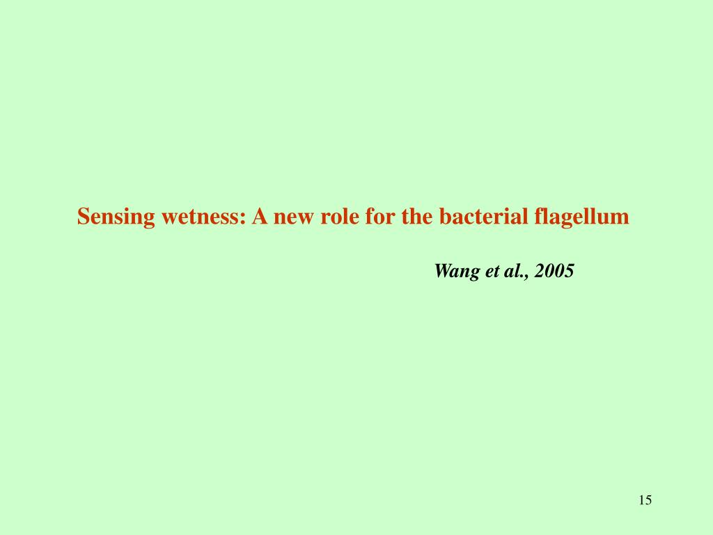 Sensing wetness: A new role for the bacterial flagellum
