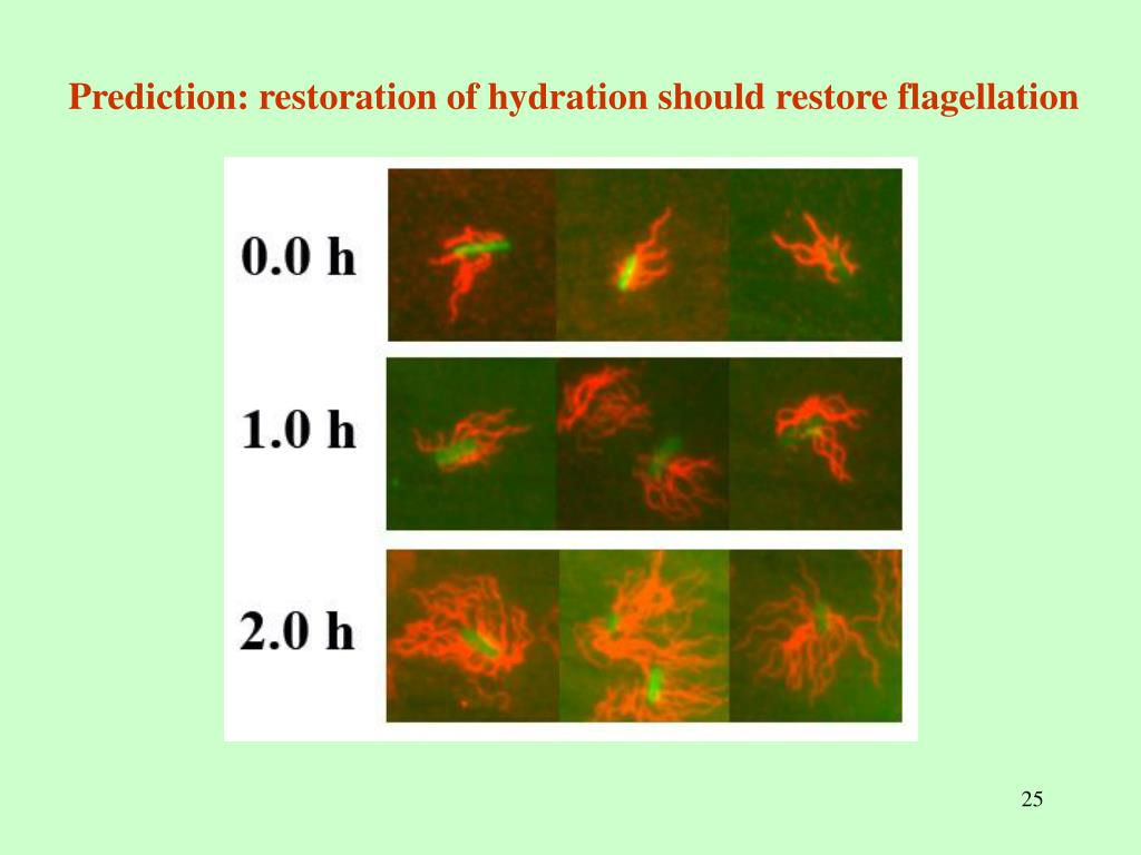 Prediction: restoration of hydration should restore flagellation