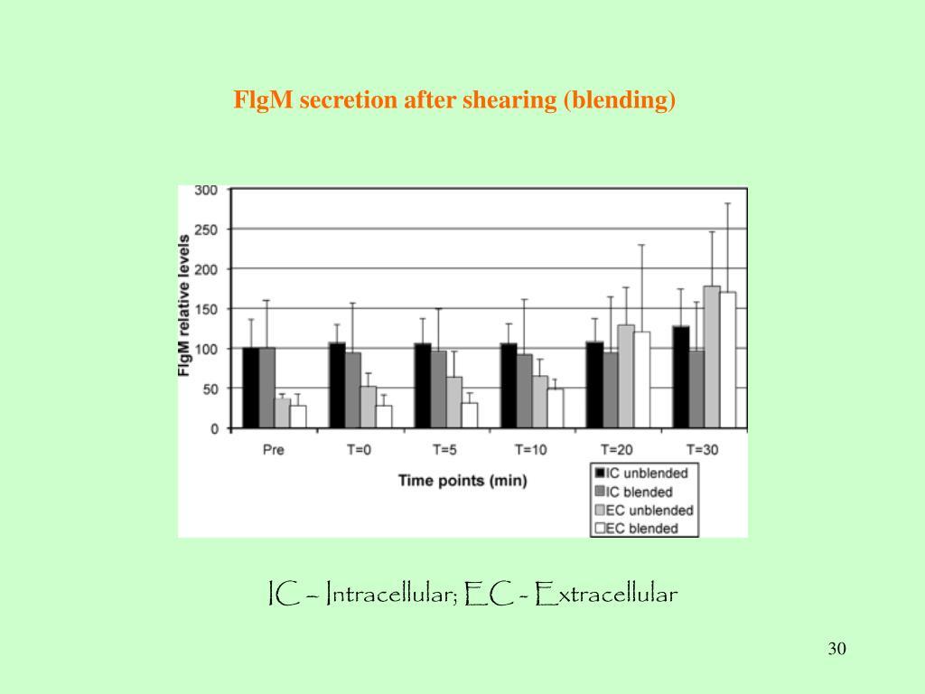 FlgM secretion after shearing (blending)