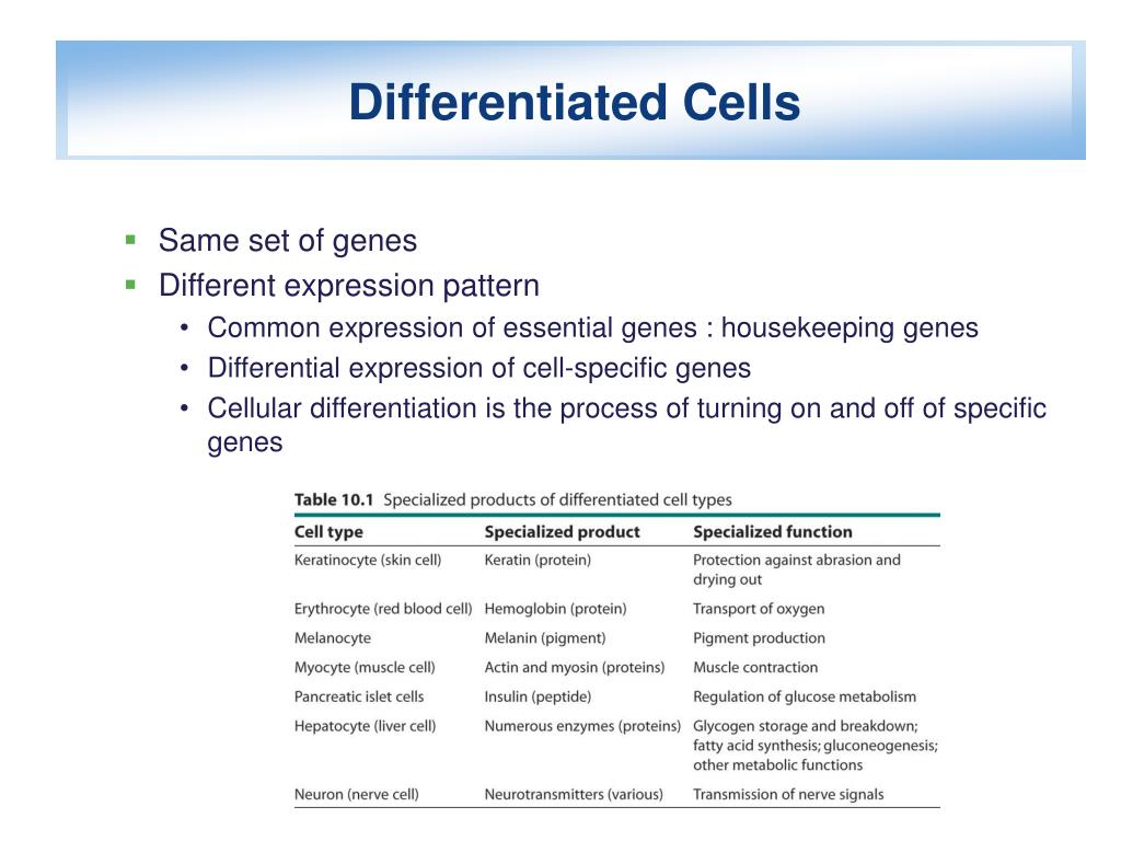 Differentiated Cells