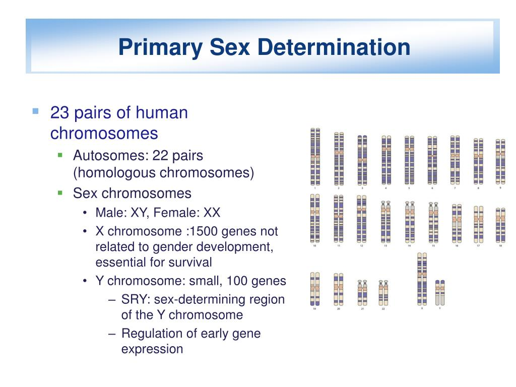Primary Sex Determination