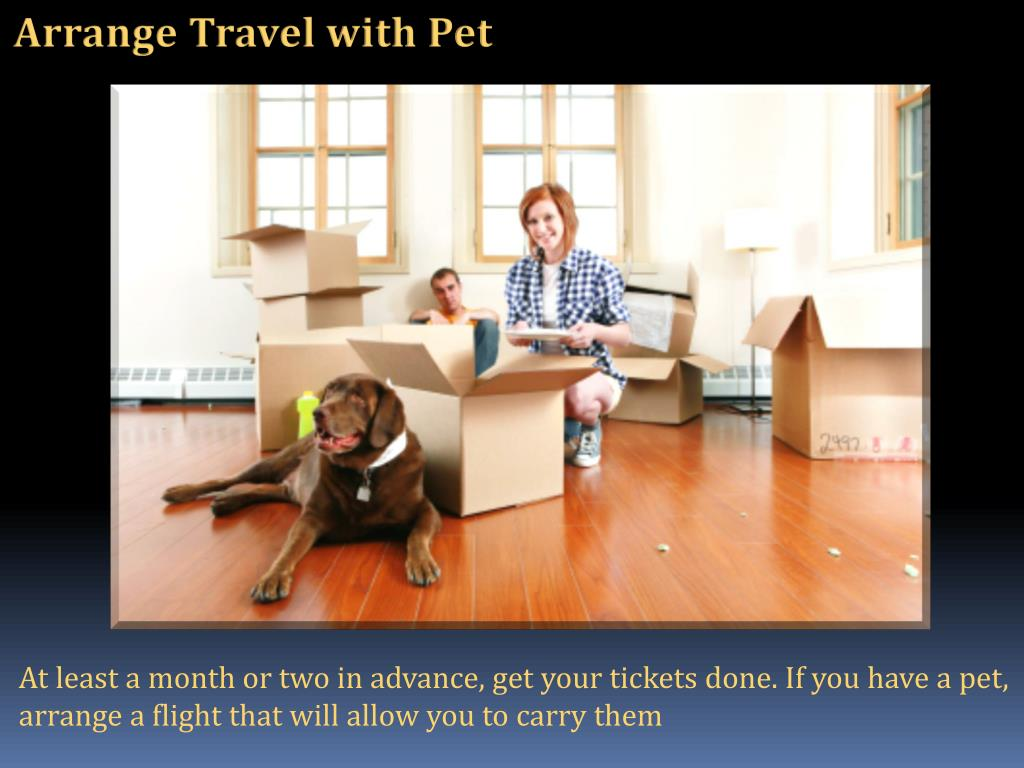 Arrange Travel with Pet