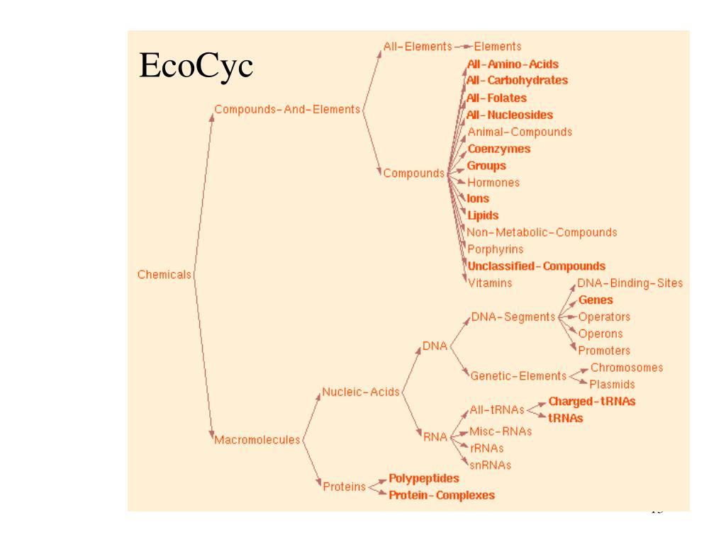 EcoCyc