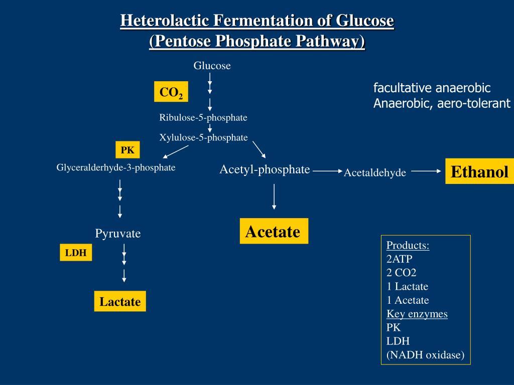 Heterolactic Fermentation of Glucose