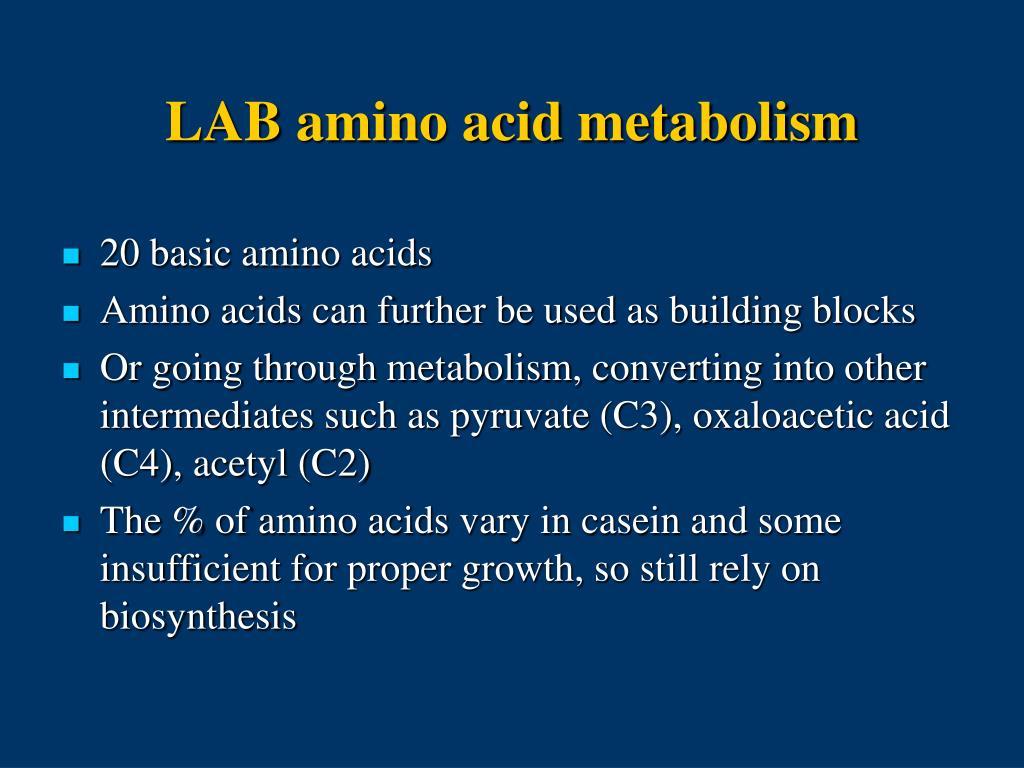 LAB amino acid metabolism