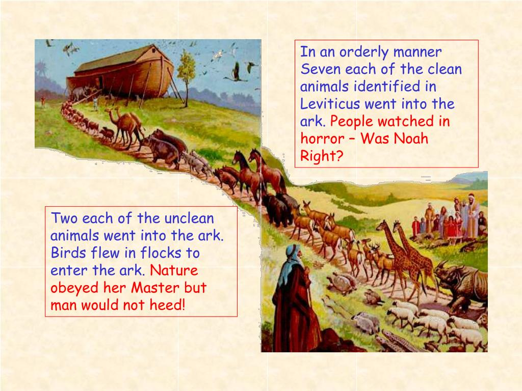 In an orderly manner Seven each of the clean animals identified in Leviticus went into the ark.