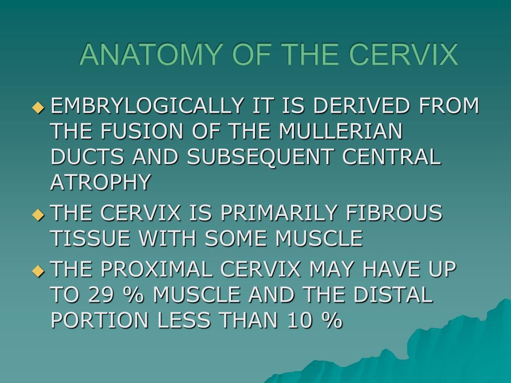 Anatomy of the cervix