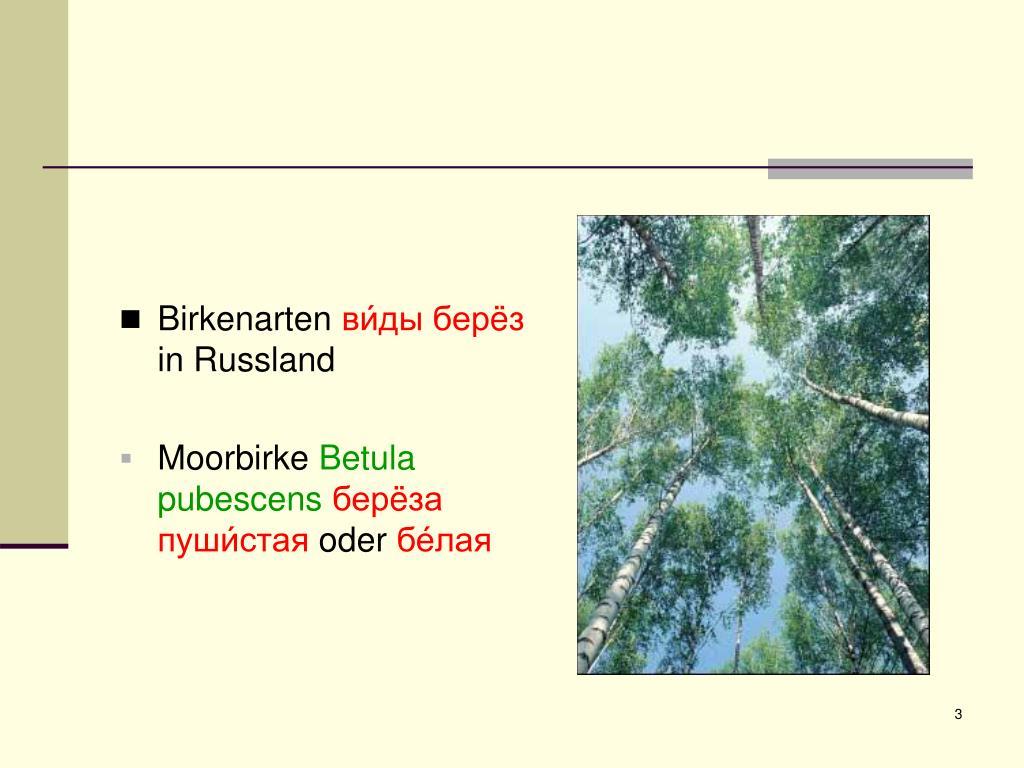 Birkenarten