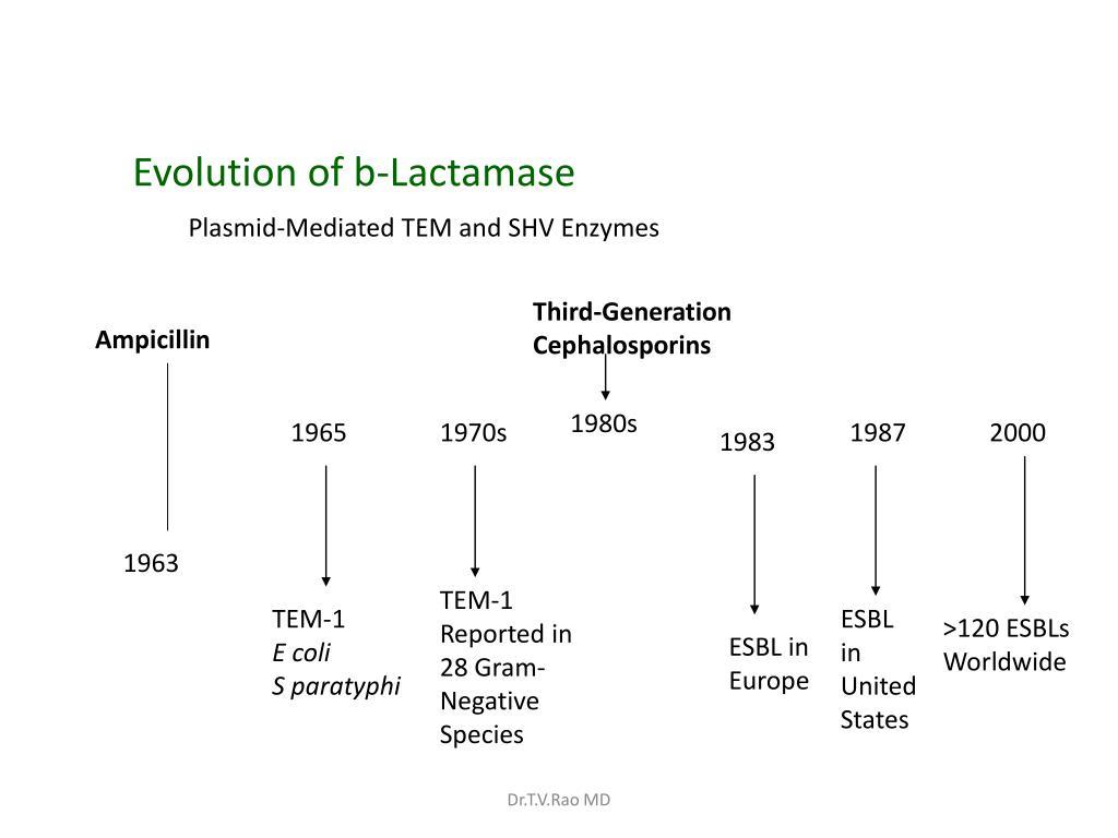 Evolution of b-Lactamase