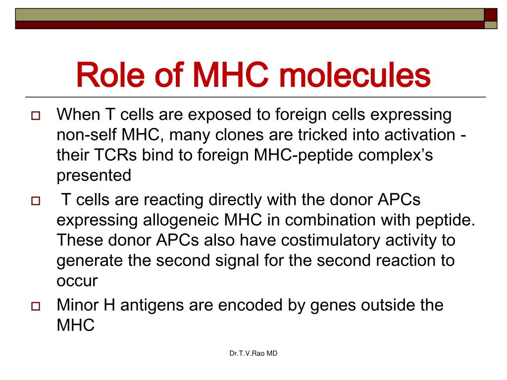 Role of MHC molecules