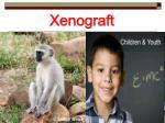 xenograft21