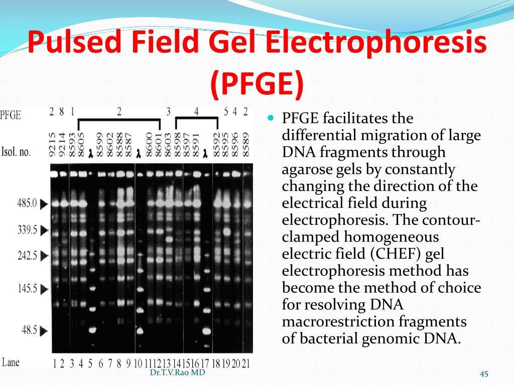 Pulsed Field Gel Electrophoresis (PFGE)