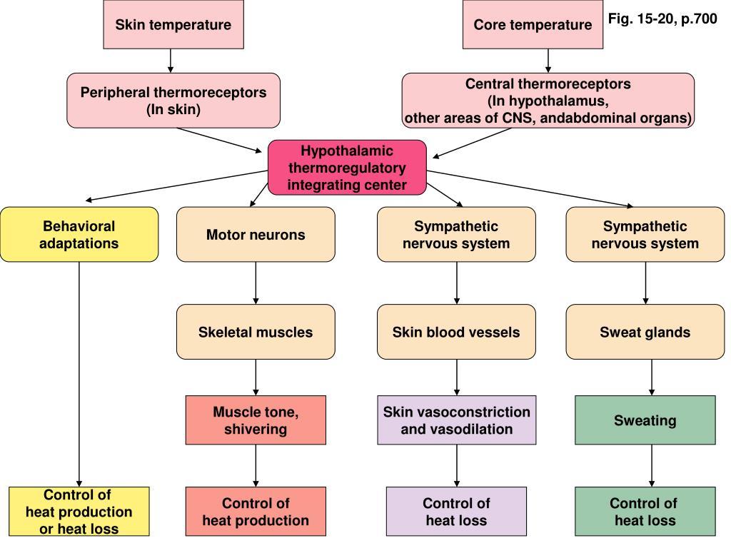 Skin temperature