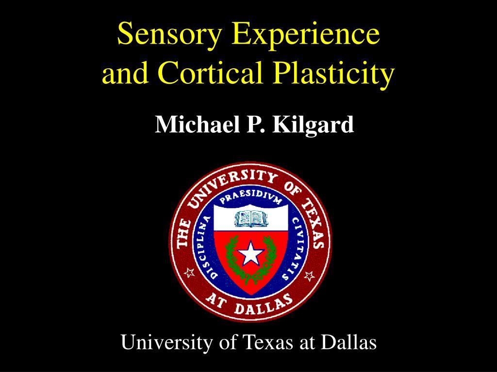 Sensory Experience