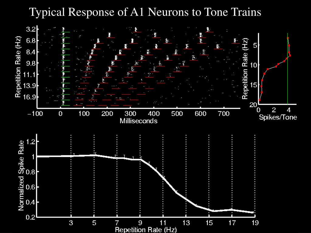 Typical Response of A1 Neurons to Tone Trains