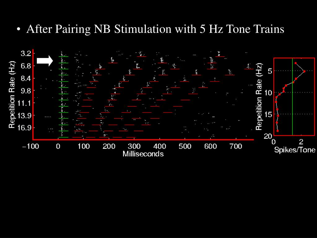 After Pairing NB Stimulation with 5 Hz Tone Trains