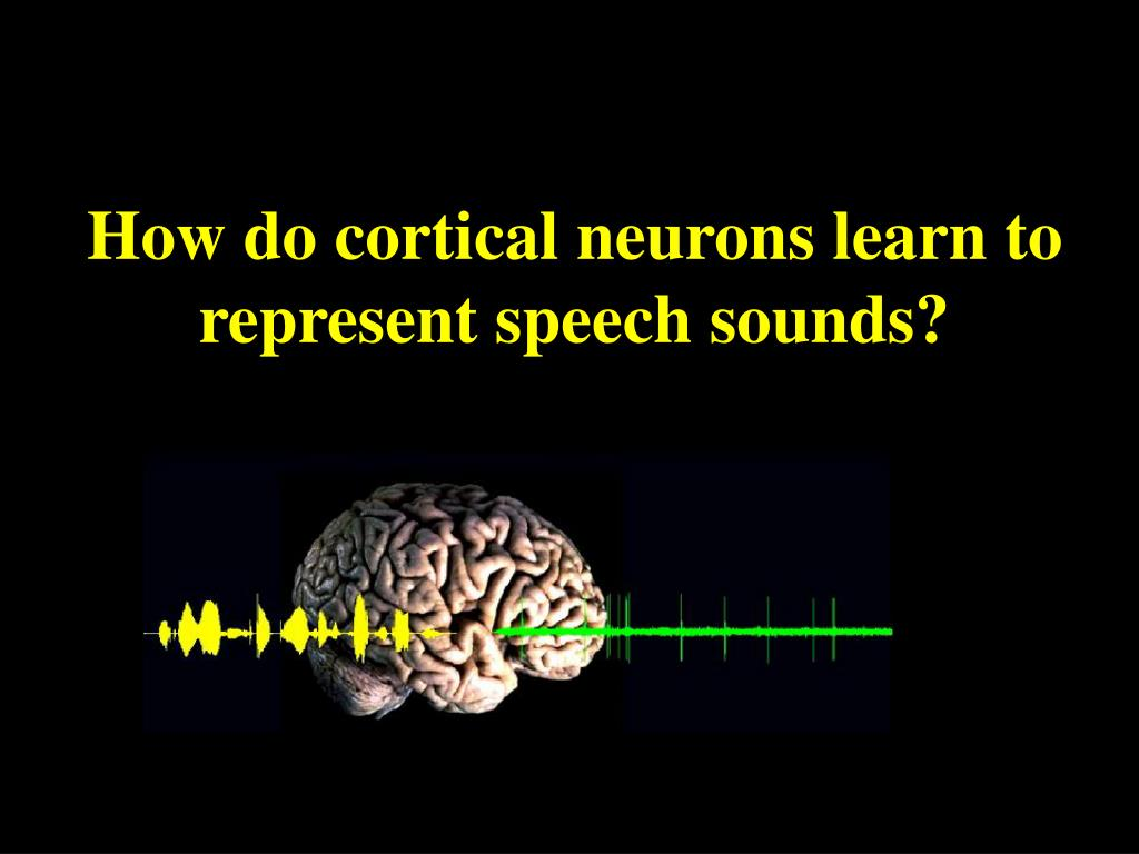 How do cortical neurons learn to represent speech sounds?