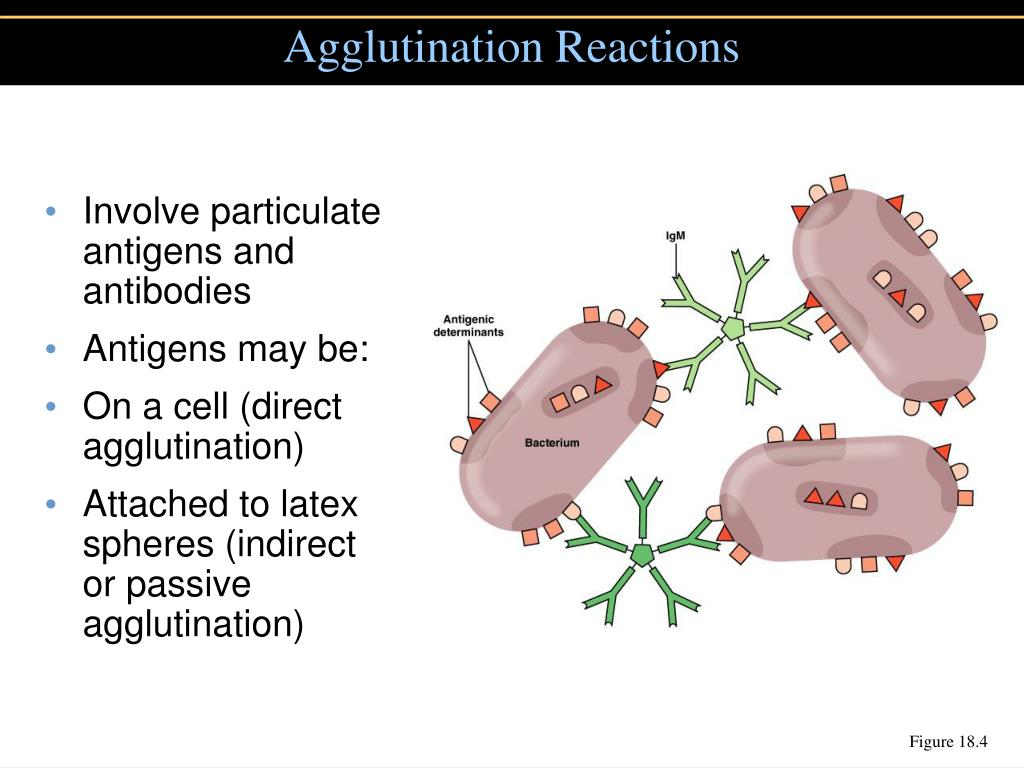 Agglutination Reactions
