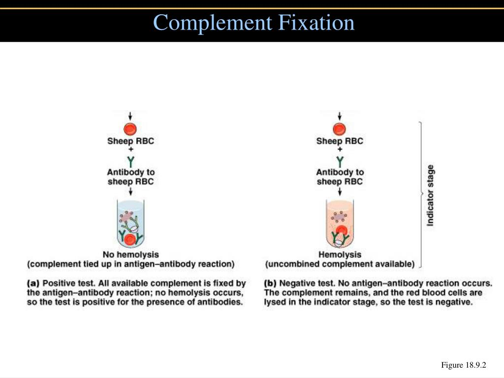 Complement Fixation