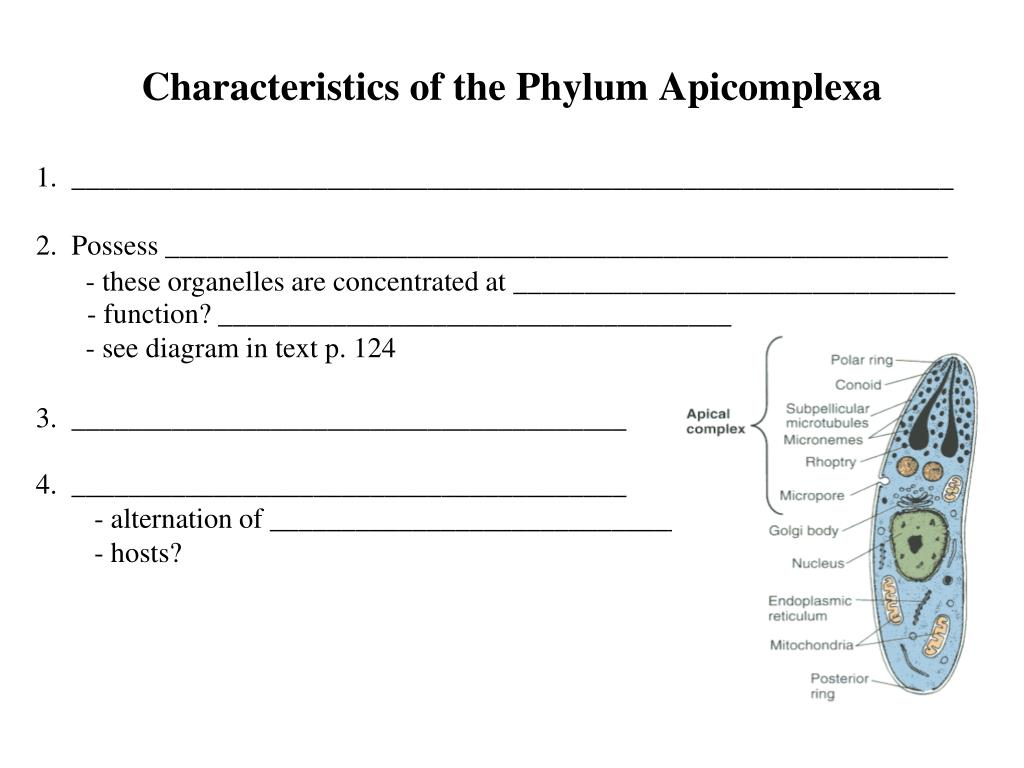 Characteristics of the Phylum Apicomplexa