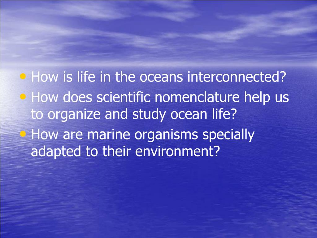 How is life in the oceans interconnected?