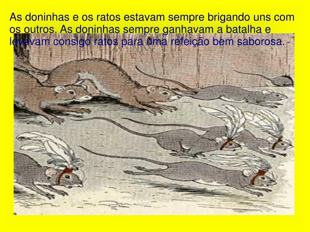 As doninhas e os ratos estavam sempre brigando uns com os outros. As doninhas sempre ganhavam a batalha e levavam consigo ratos para uma refeição bem saborosa.