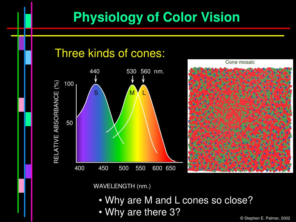 Physiology of Color Vision
