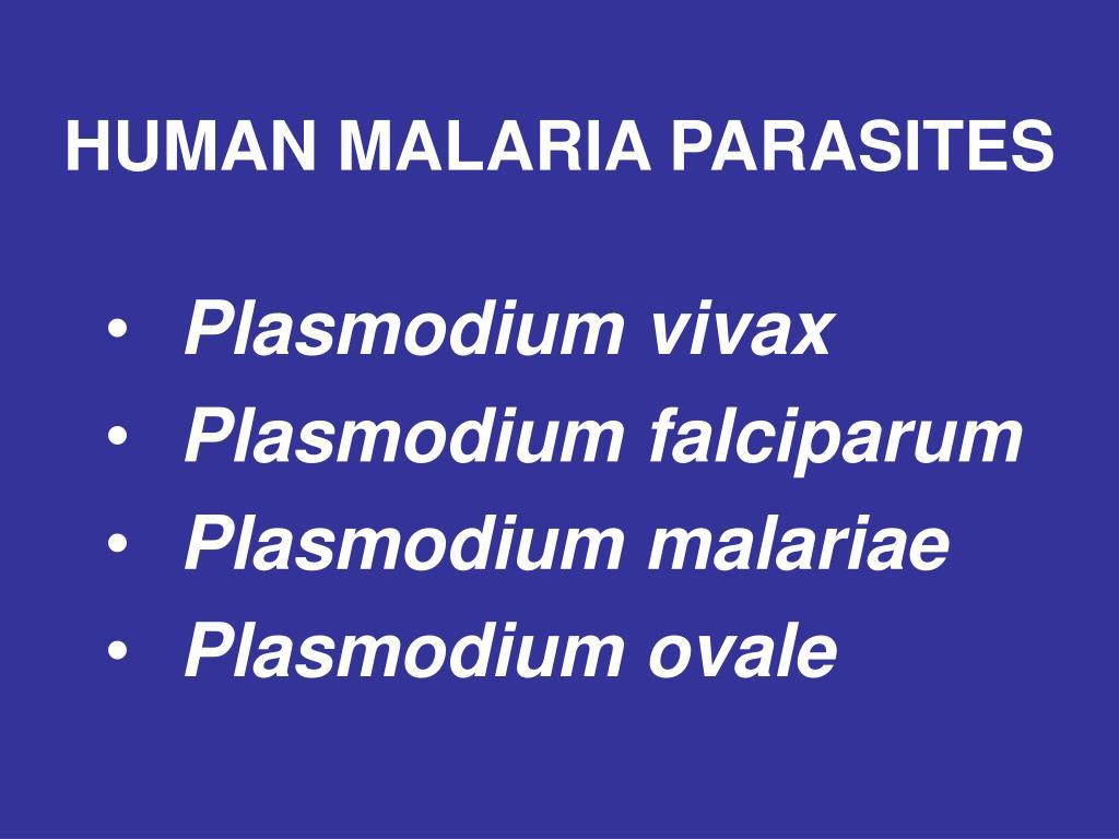 HUMAN MALARIA PARASITES